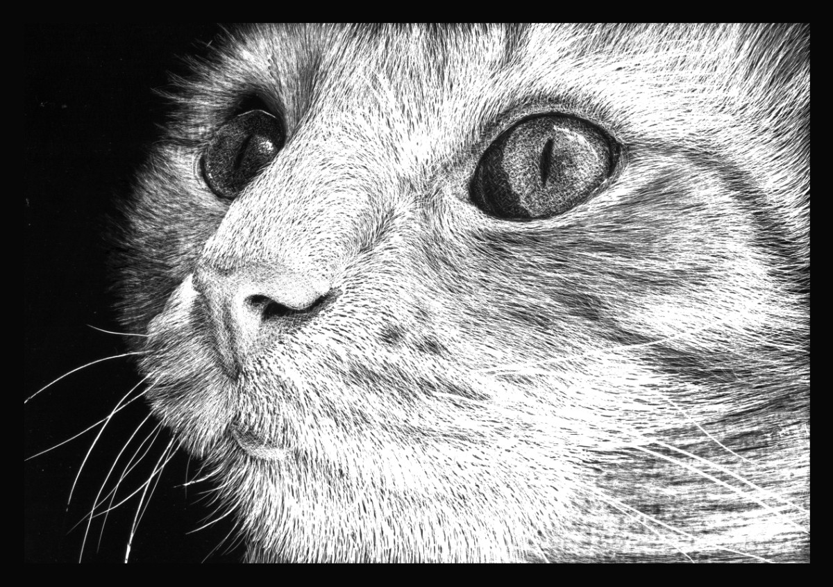 How To Scratchboard Animals Course Online Art Lessons