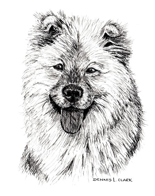How to Draw a Long Haired Dog in Pen and Ink — Online Art ...