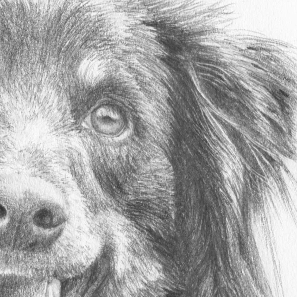 how to draw dogs course online art lessons