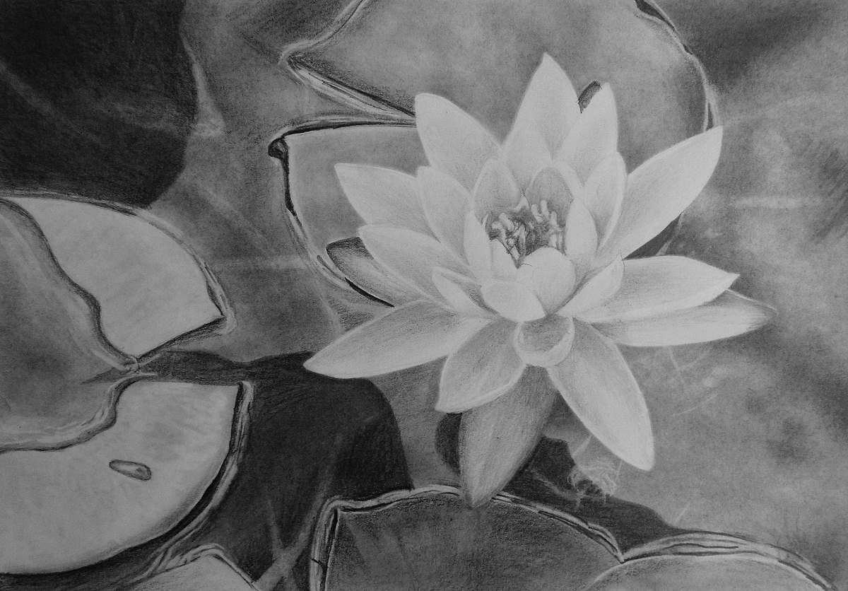 How To Draw A Water Lily Online Art Lessons