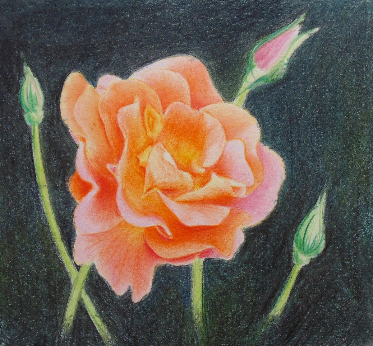 How To Draw A Rose With Colored Pencils Skill Level : 1 Beginner