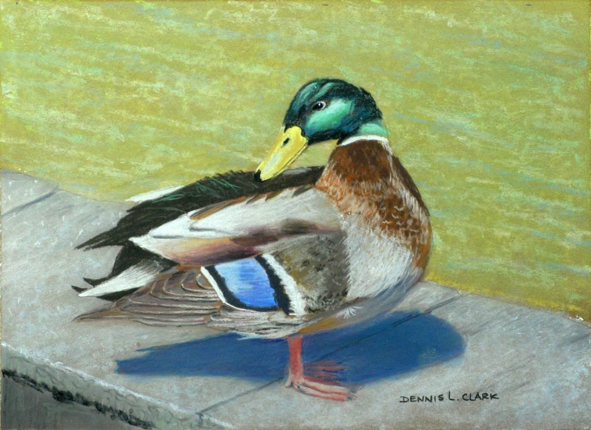 Drawing Wolf By Oil Pastels How To Draw Mallard Duck At Pond In Pastel