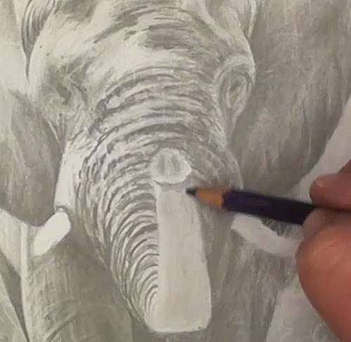 drawing the forehead and trunk wrinkles