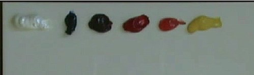 colors used for painting the grapes