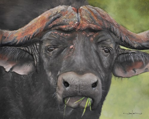 final painting buffalo in oil
