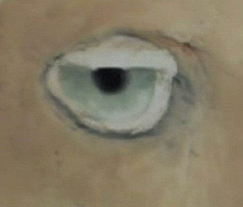 painting the eye