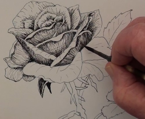 progress of the petals