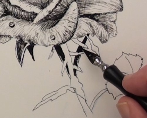 drawing the stem and leaves of the rose
