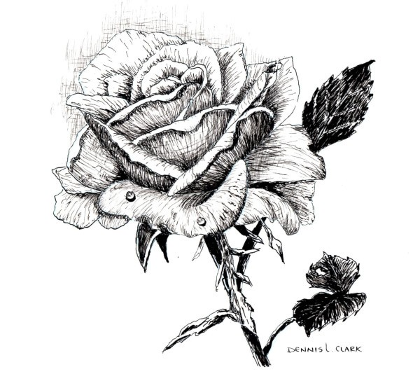 final drawing of the rose