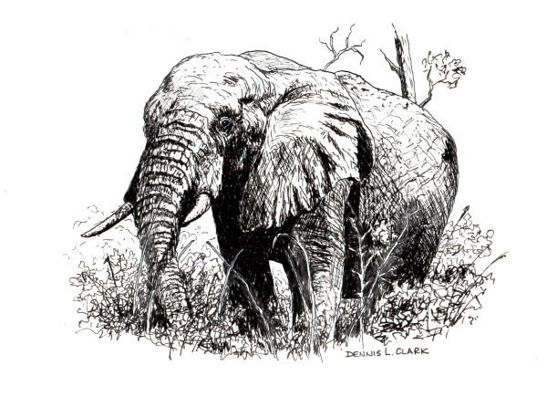 final drawing elephant