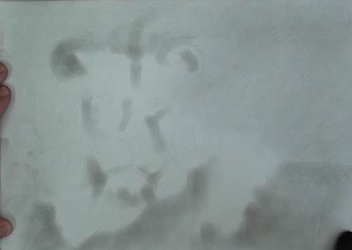 drawing the background of the lion