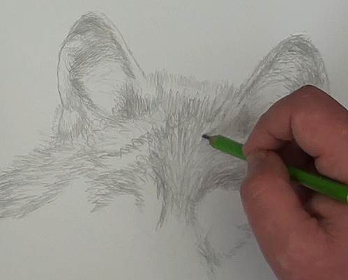refining the tonal layers of the wolf