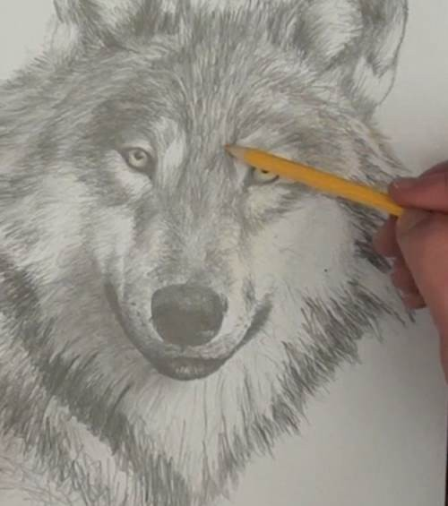 add yellow reflections to the wolf