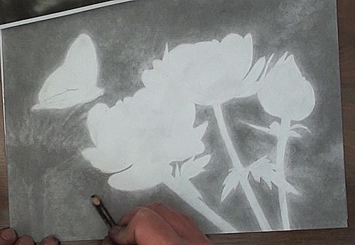 drawing the background of the flower and the butterfly