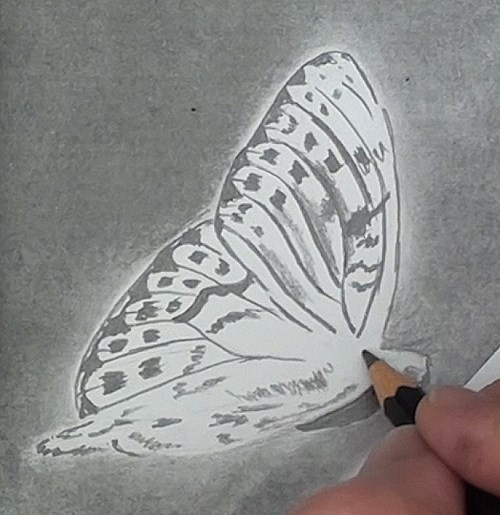drawing the butterfly