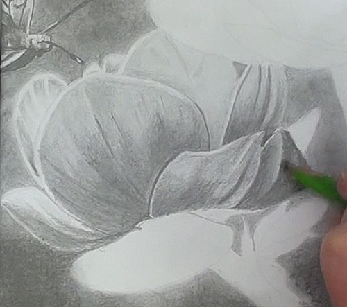 drawing the petals of the flowers