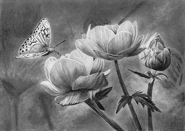 final drawing of drawing flowers and a butterfly in pencil