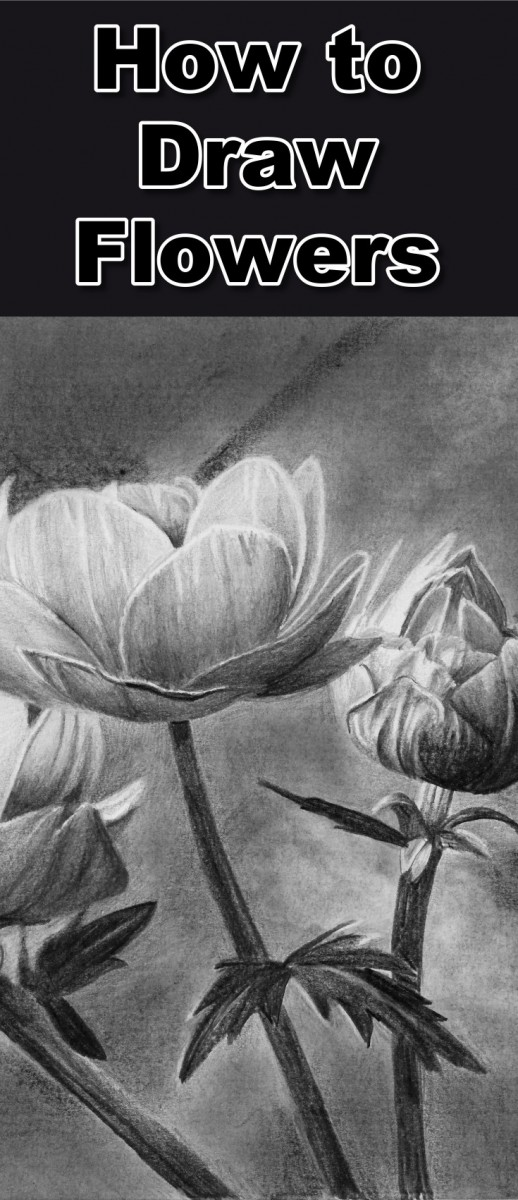 how to draw flowers and a butterfly in pencil