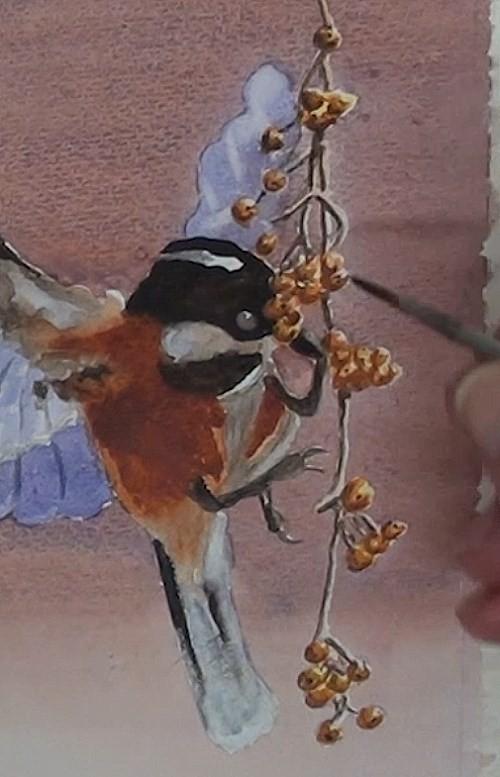 painting the berries of bird eating berries in watercolor