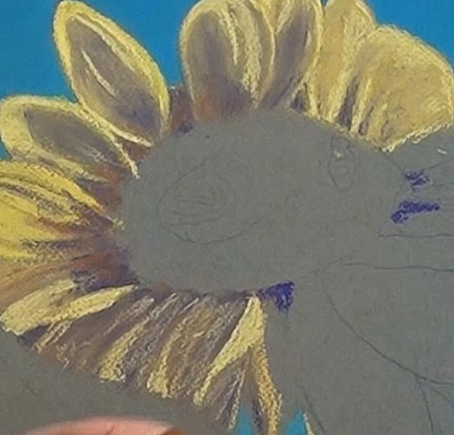 drawing the lower petals - sunflower in pastel