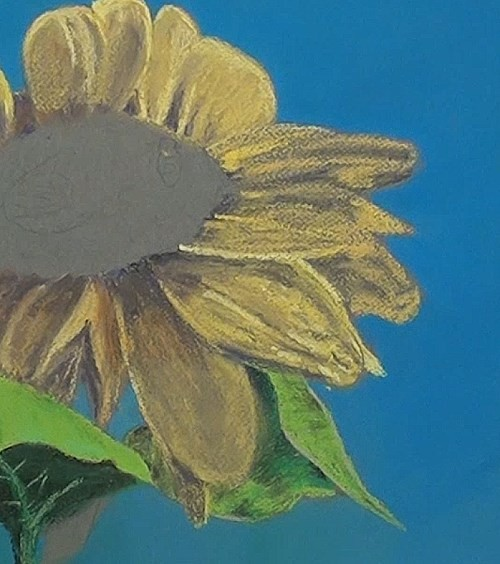 complete drawing all the petals - sunflower in pastel