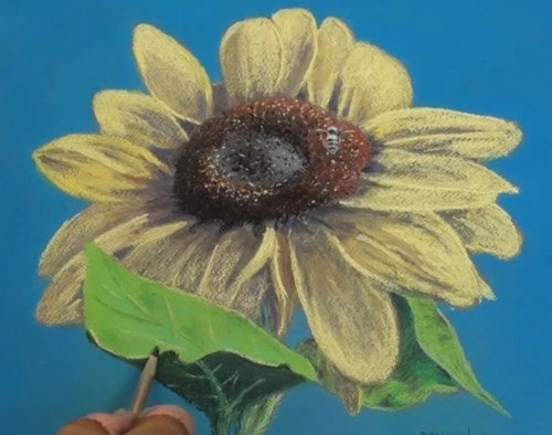 drawing the final details - sunflower in pastel
