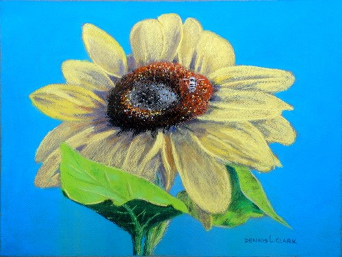final drawing sunflower in pastel
