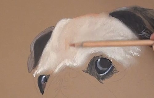 how-to-draw-a-pug-portrait-in-pastel-forehead