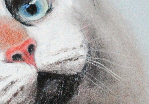 Pastel cat drawing with scratched whiskers