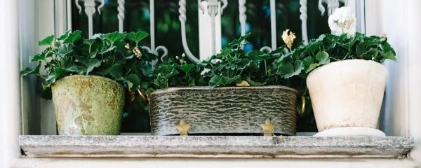 Row of garden pots still life
