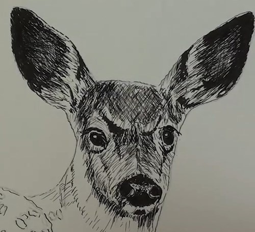 final-drawing-of-deer-in-pen-and-ink-face