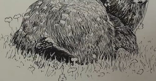 final-drawing-of-deer-in-pen-and-ink-grass