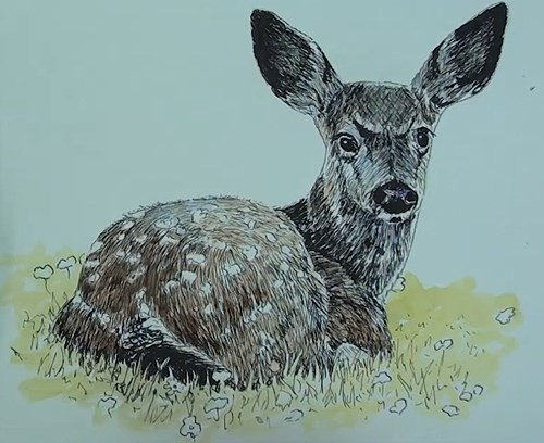 final-drawing-of-deer-in-pen-and-ink-color-wash
