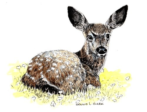 final-drawing-deer-in-pen-and-ink