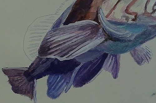 final-painting-fish-in-acrylic-fins