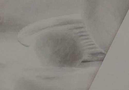 how-to-draw-seashells-in-pencil-ribs-back-shell