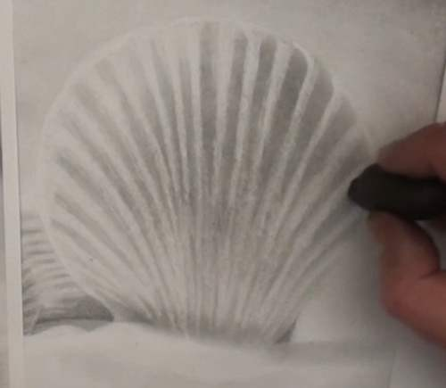 how-to-draw-seashells-in-pencil-knead-eraser-define-shape