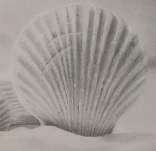 how-to-draw-seashells-in-pencil-scratches-sea-shell