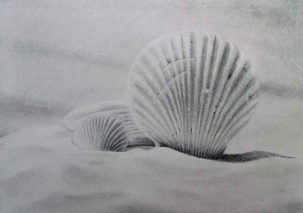 pencil-shells-final