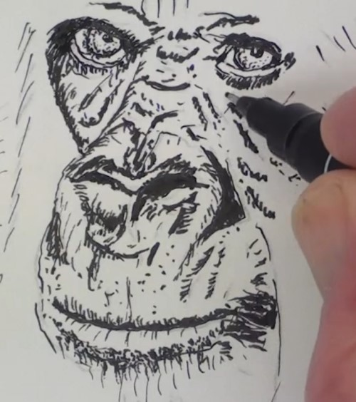 how-to-draw-a-gorilla-in-pen-and-ink-nose-mouth