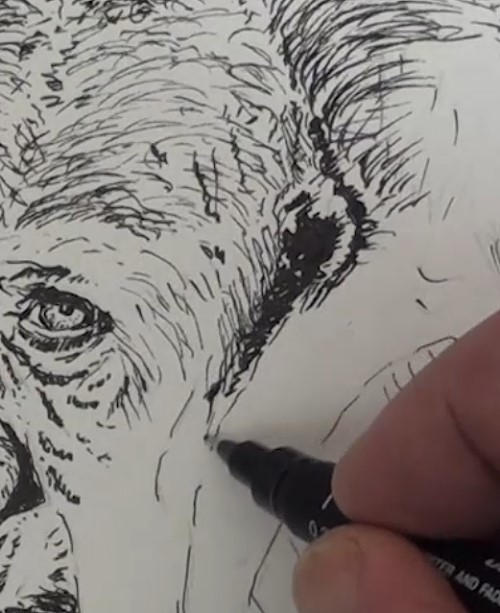 how-to-draw-a-gorilla-in-pen-and-ink-ear