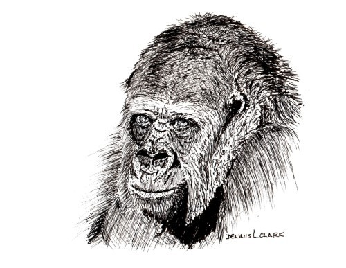 final-drawing-gorilla