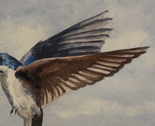 how-to-paint-two-swallows-in-watercolor-second-swallow-wing