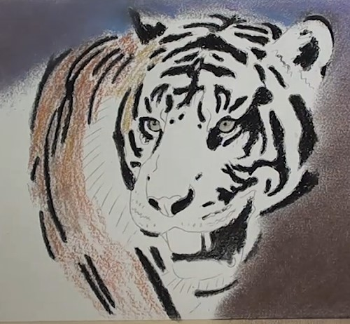 how-to-draw-a-tiger-portrait-in-pastel-body-color