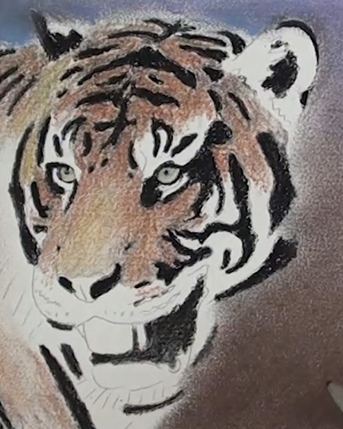 how-to-draw-a-tiger-portrait-in-pastel-face