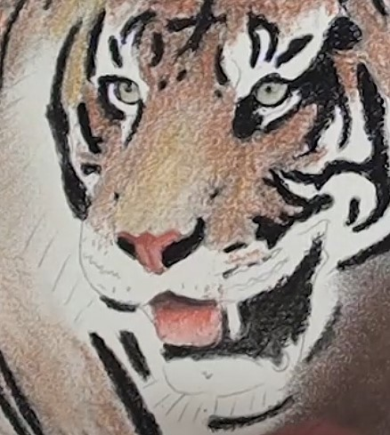 how-to-draw-a-tiger-portrait-in-pastel-tongue