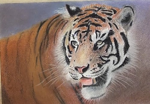 how-to-draw-a-tiger-portrait-in-pastel-main-body-whiskers