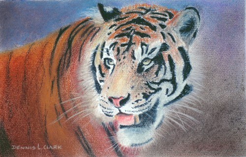 final-drawing-tiger-portrait-in-pastel