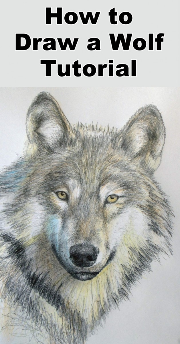 How To Draw A Wolf In Pencil Online Art Lessons