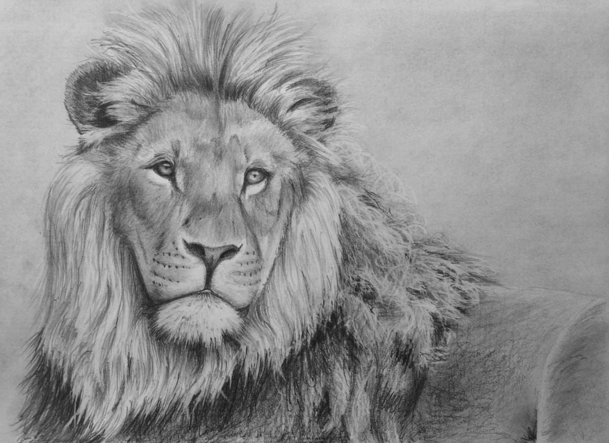 How to draw a lion in pencil
